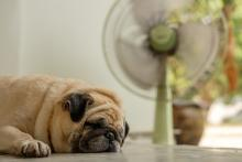 wisconsin home improvement, summer southeast wi, wi cooling, prevent summer smells, house odor wi